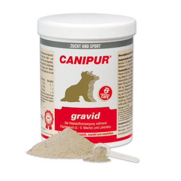 CANIPUR - gravid